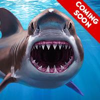 Shark Coming Soon
